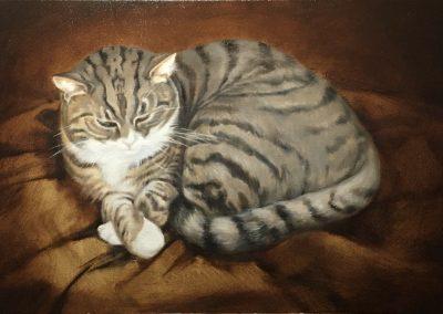 portretten-dierenportret-kat-poemetje